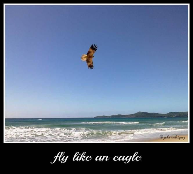 fly-like-an-eagle-web
